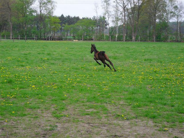 Spaß auf der Weide